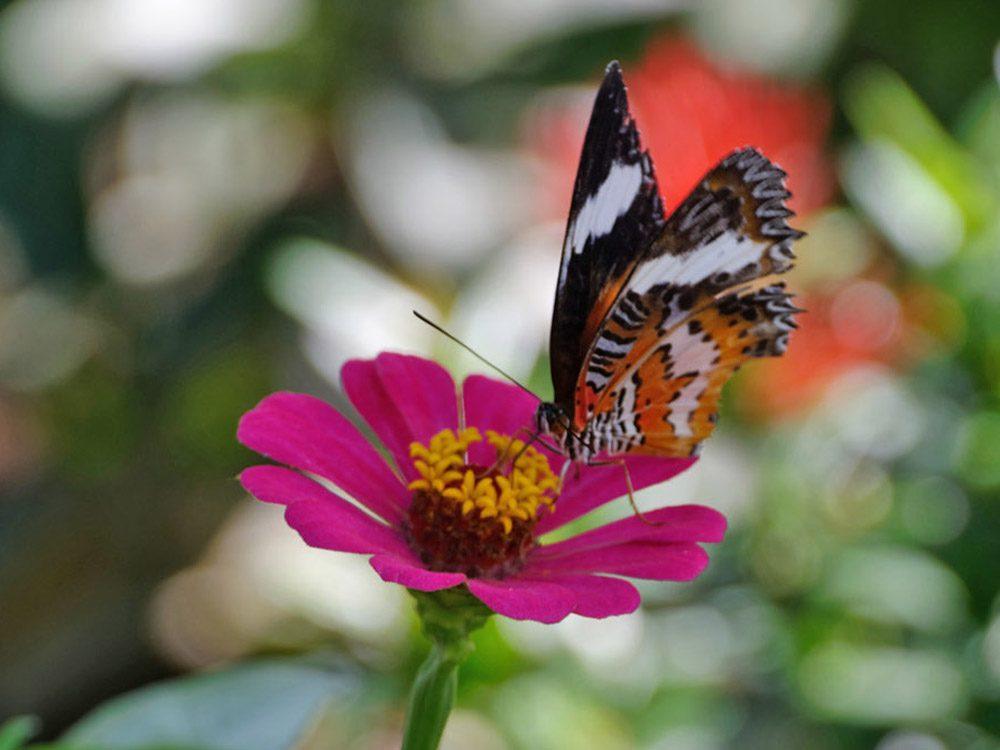 Bali – Les papillons